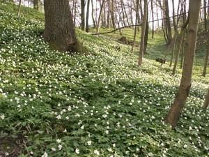 zdęcie lasu, Kazimierz Dolny