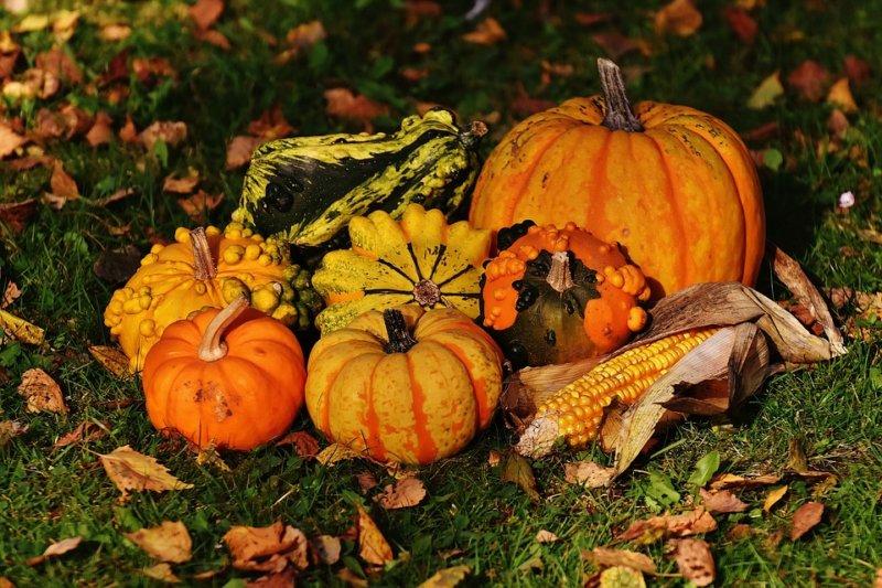 Święto jesieni w Kazimierzu Dolnym