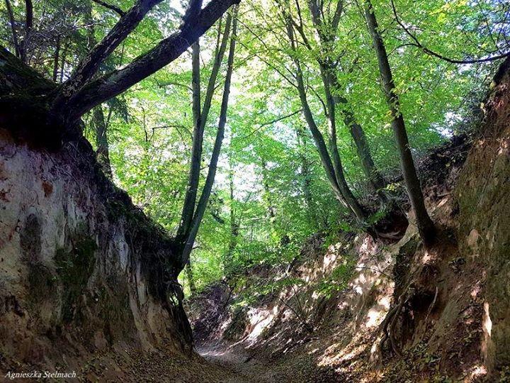 """""""Nigdzie nie szumią tak drzewa zielone, jak w wąwozach, w Kazimierzu mił Wieczność jest…"""