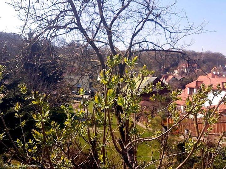 Wiosno, ach to ty!