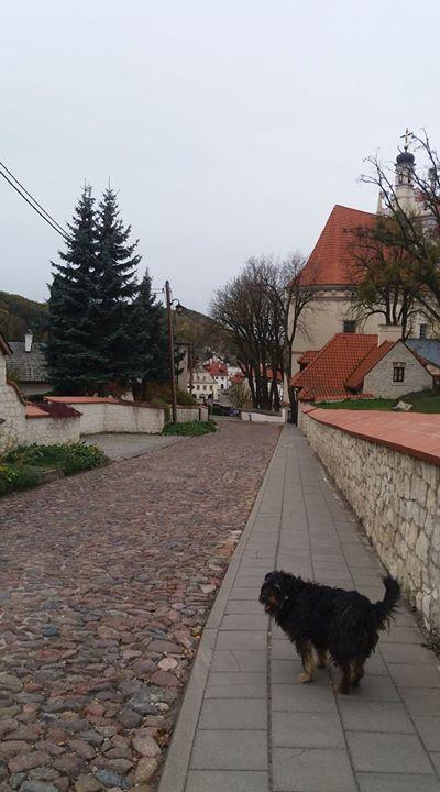 Kazimierz Dolny wydawałoby się ze miasto ludzi wrażliwych, artystów. Byłam służbowo i serce mi…