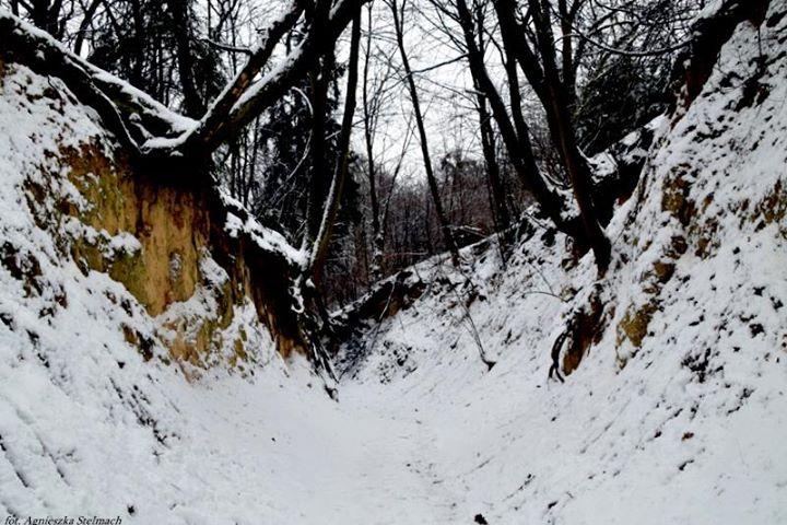 Spójrzcie tylko jak pięknie wygląda Wąwóz Korzeniowy w zimowej odsłonie