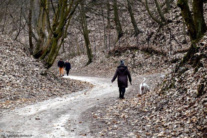 Coraz więcej spacerowiczów szuka w kazimierskich wąwozach pierwszych oznak wiosny ️️