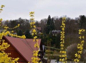 W Kazimierzu coraz bardziej widać wiosnę. Przyjedziecie zobaczyć? 🧐